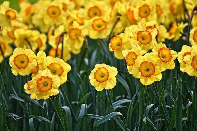 wiosenne kompozycje kwiatowe w donicach